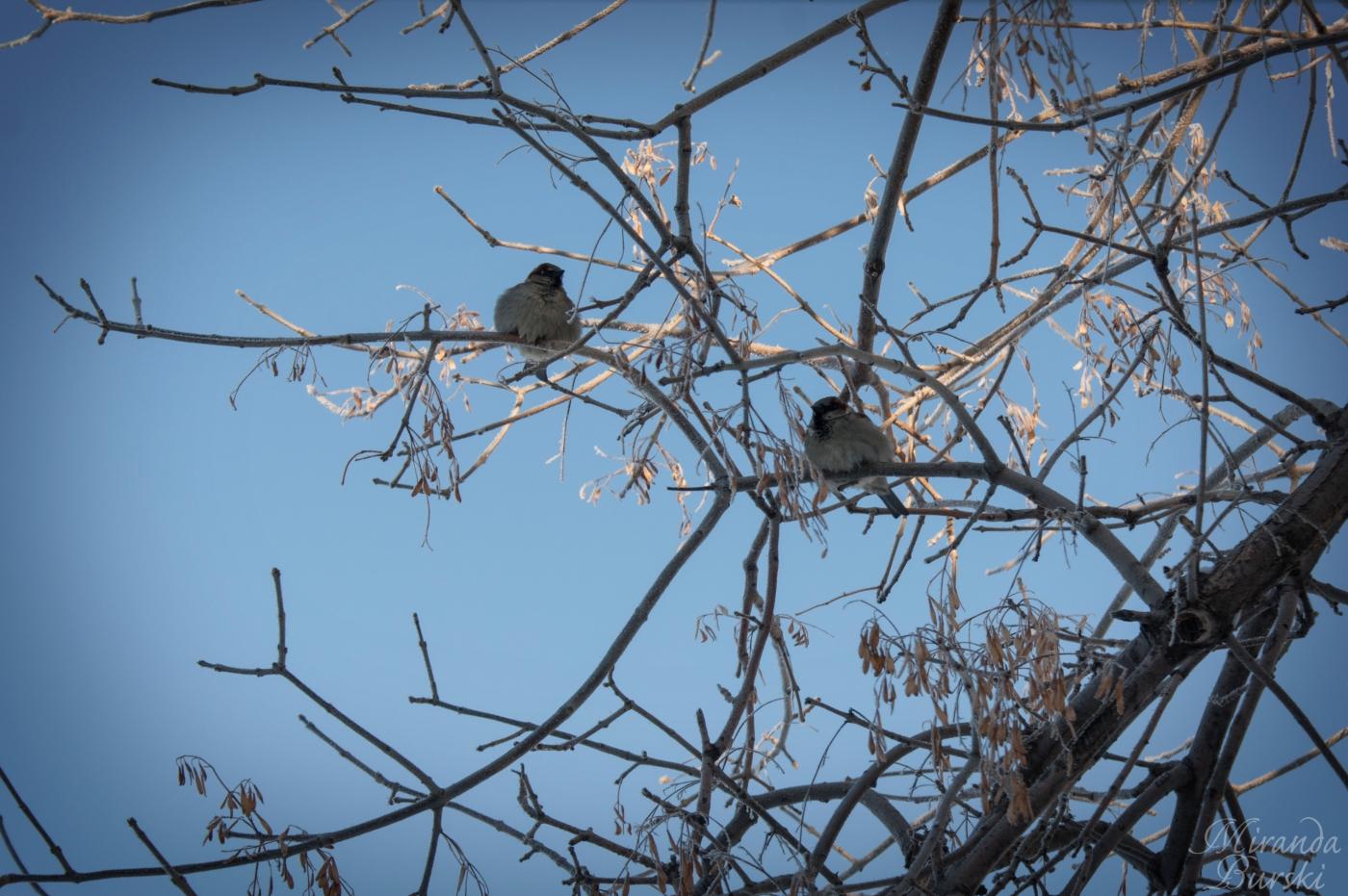 Hello, Birdies