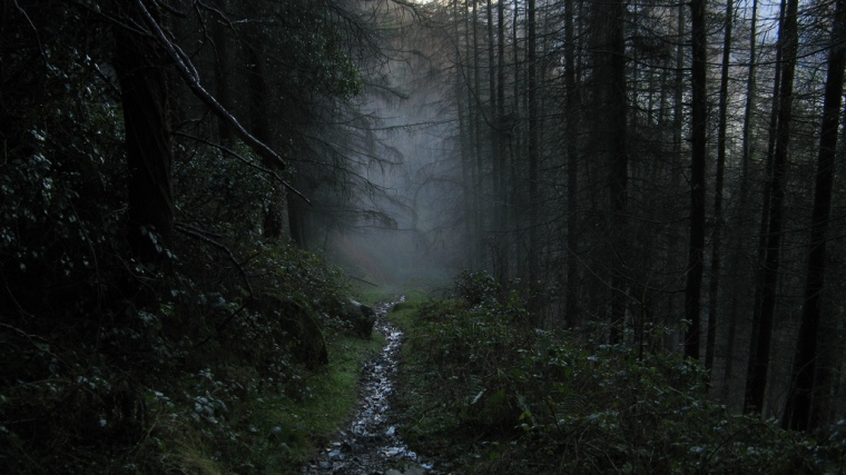 IrelandForest