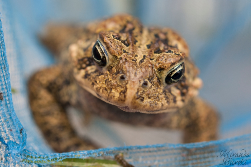 A close-up of a frog in a net