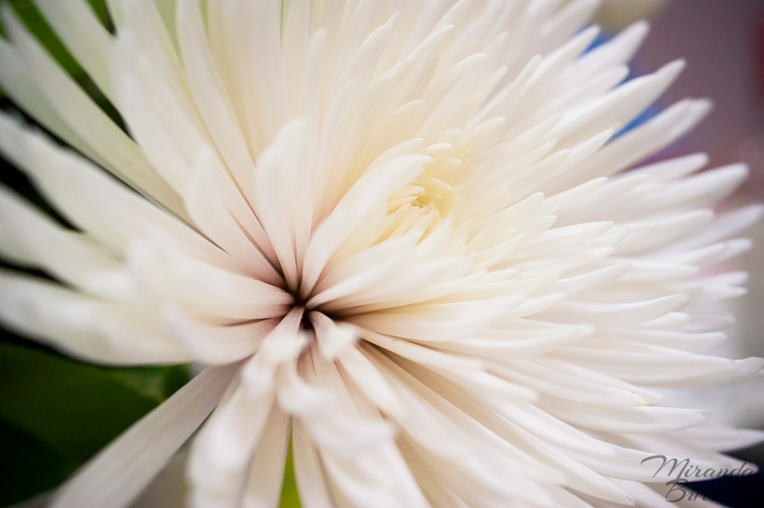 Poofy White Flower