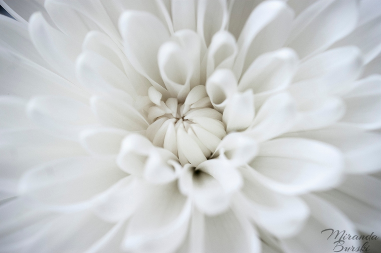 White Flower Burst