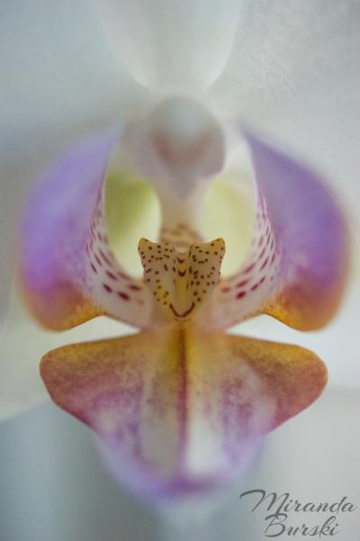 Orchid Centre