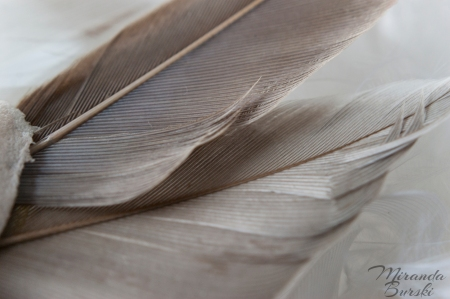 Wing Feathers