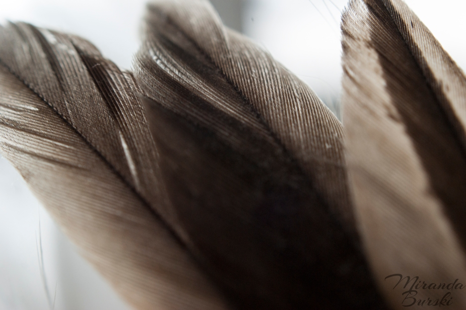 Three Brown Feathers