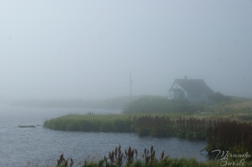 A foggy landscape featuring a small house, water, and reeds in Nova Scotia