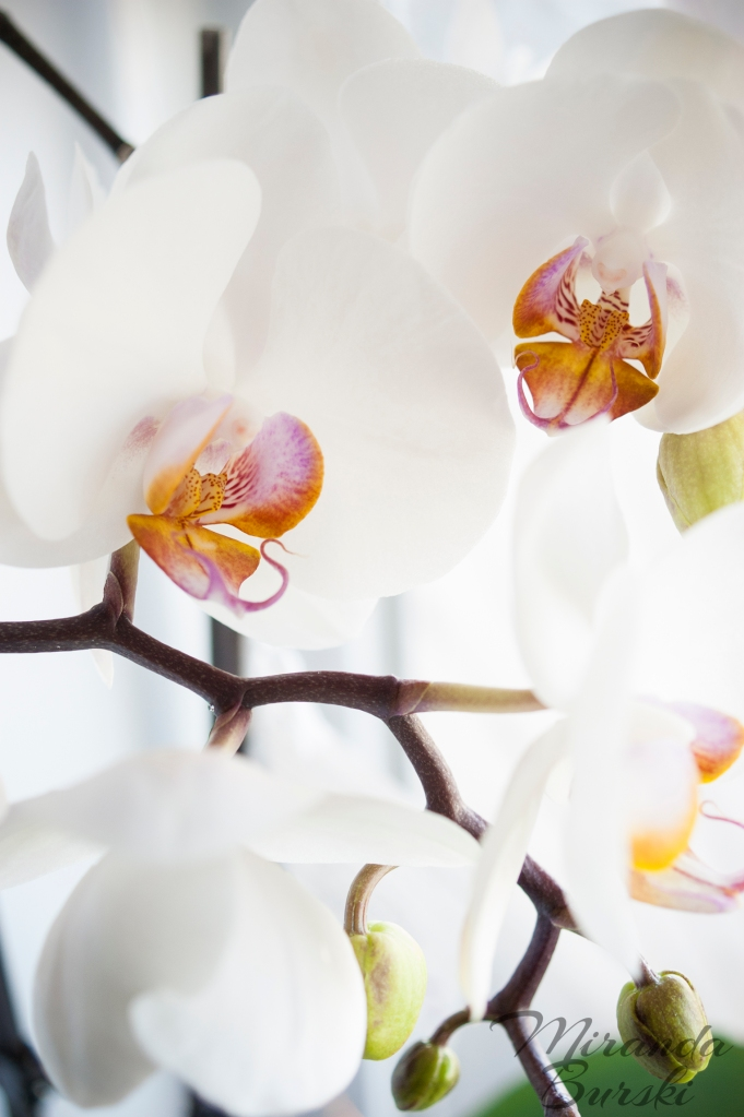 Yellow, white and purple orchid flowers