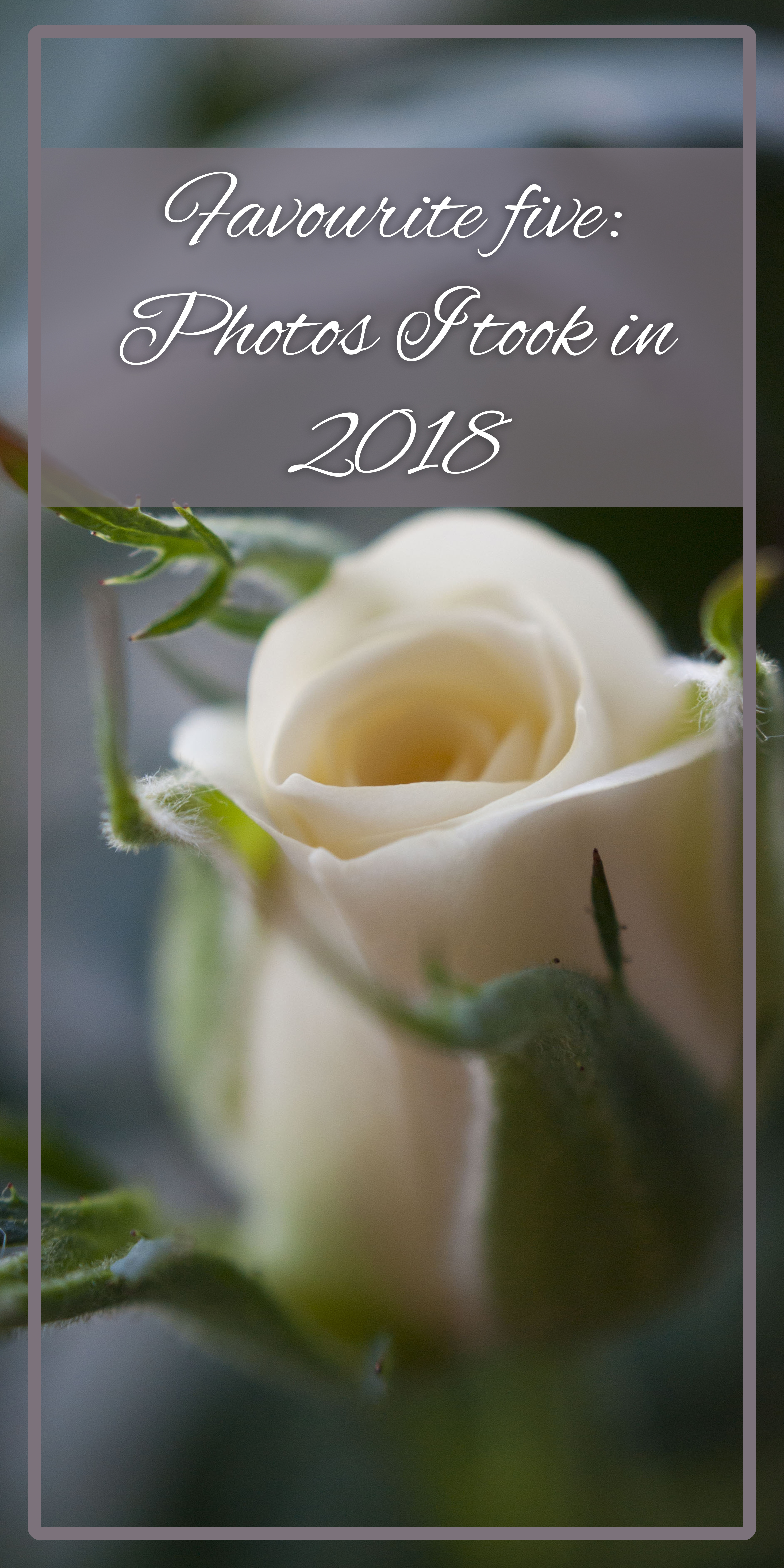 "A picture of a rosebud with text overlaid that says ""Favourite five: Photos I took in 2018."""