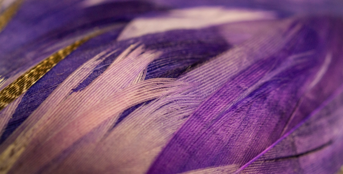 A collection of purple feathers in various shades.