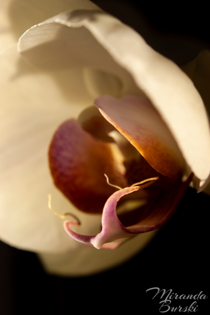 An orchid, the edges of its petals highlighted by sunlight and the rest in shadow.