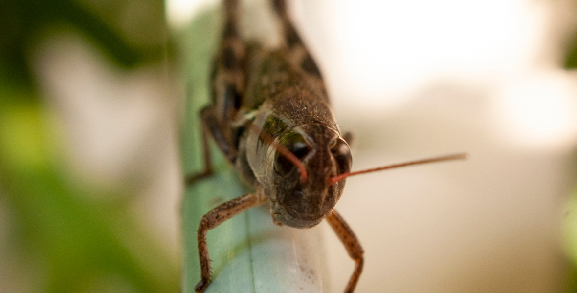 A small grasshopper on a pole.