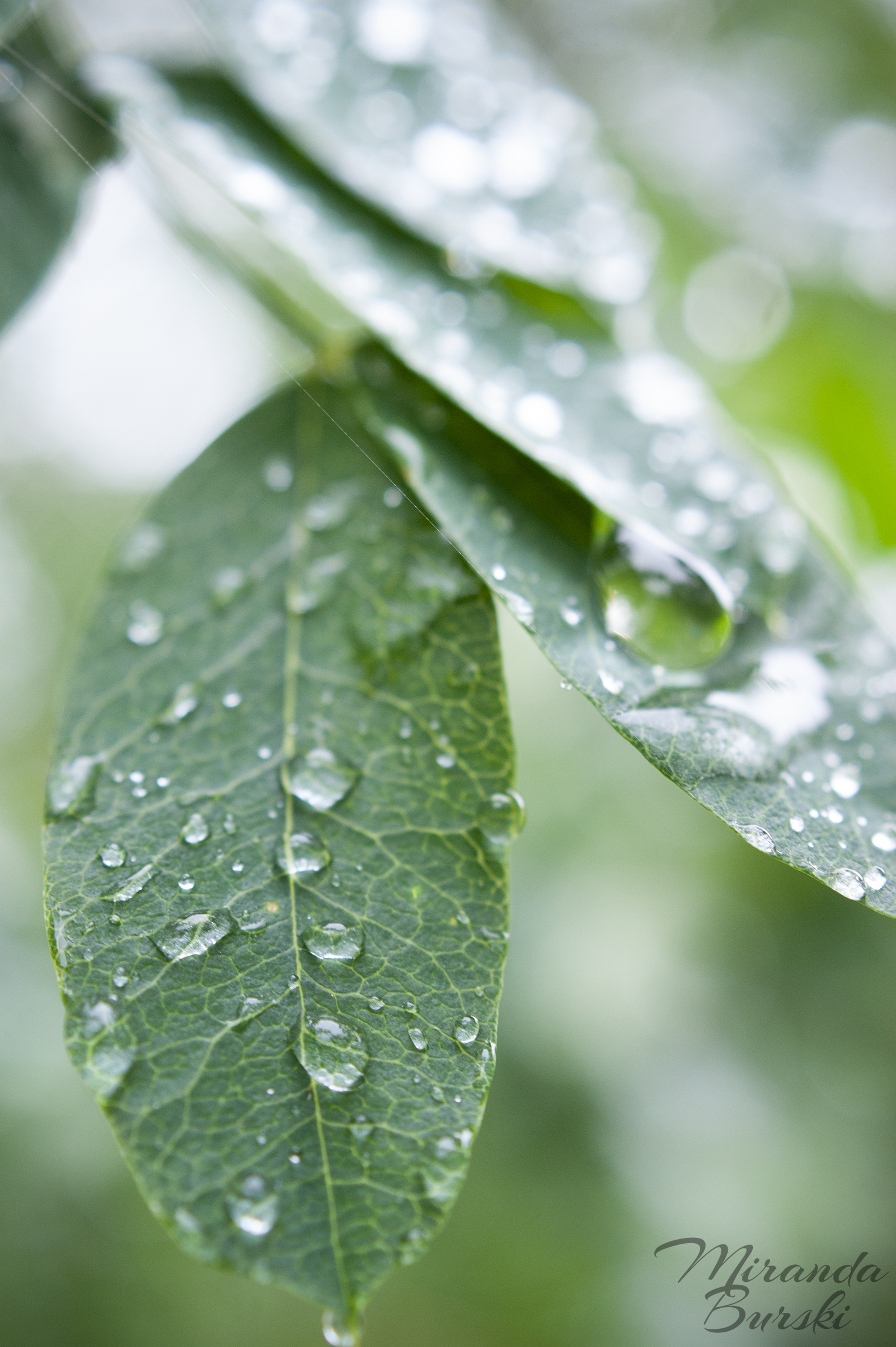 A close-up of raindrops on tree leaves.