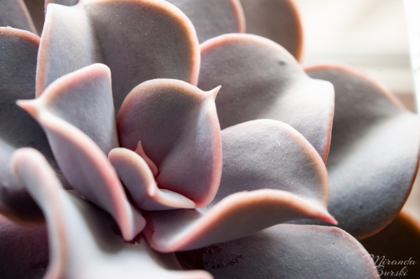 A close-up of leaves on a succulent plant.