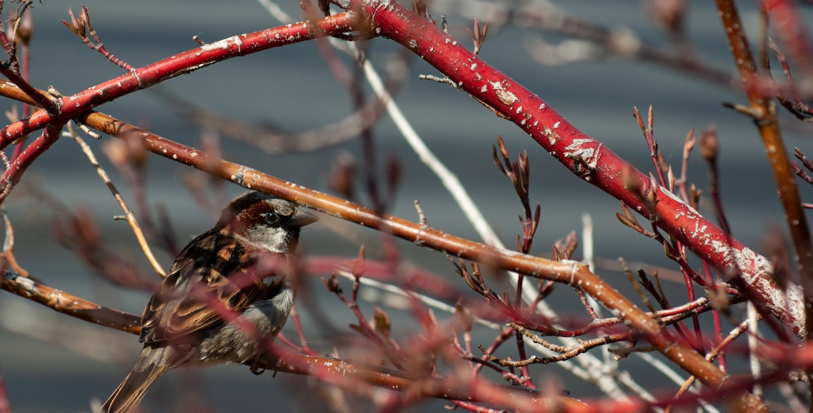A small bird sitting in a cluster of branches.