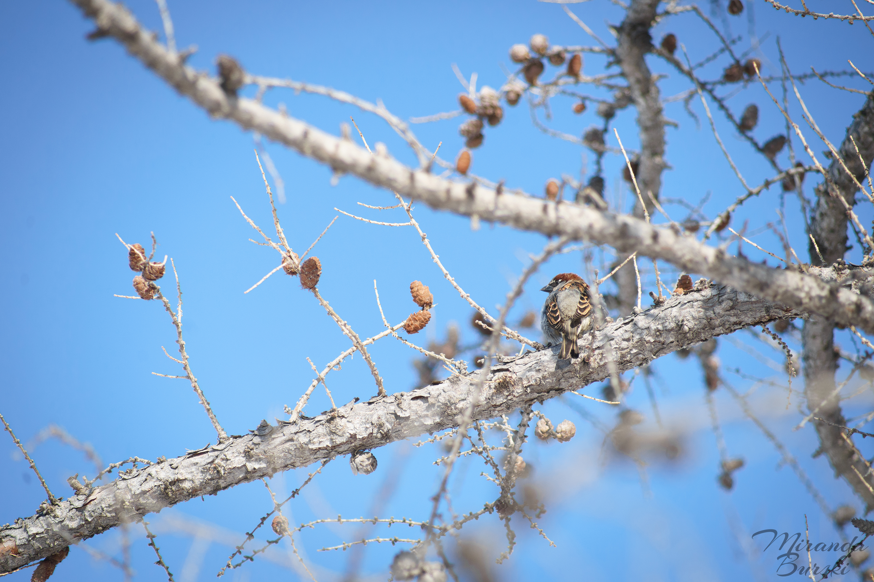 A small bird sitting on the branches of a tree.