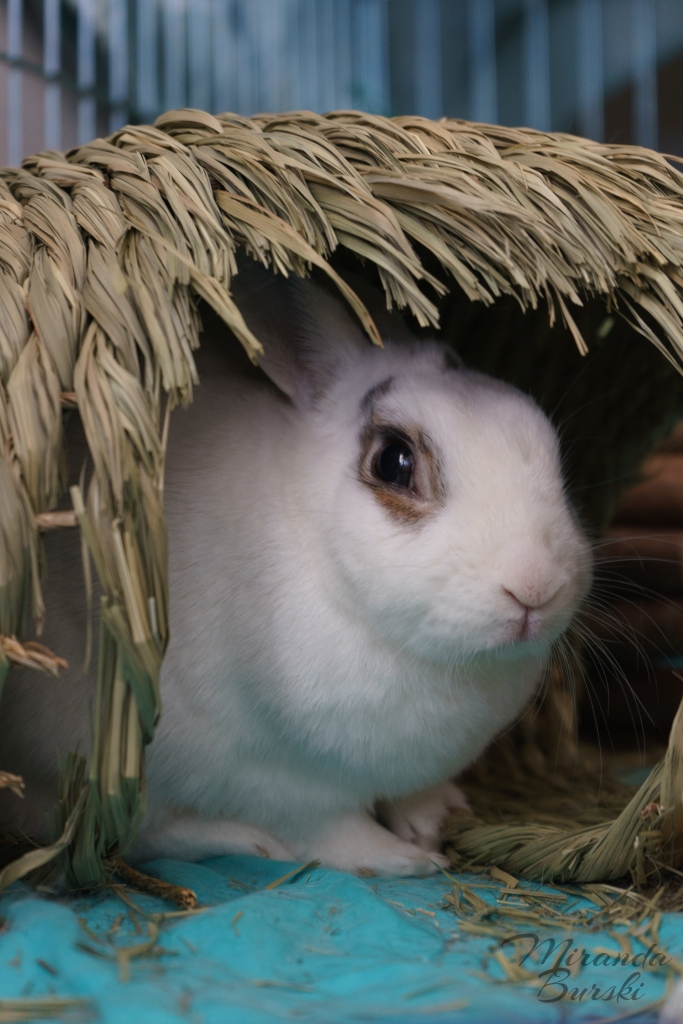 A white rabbit sitting in a basket.