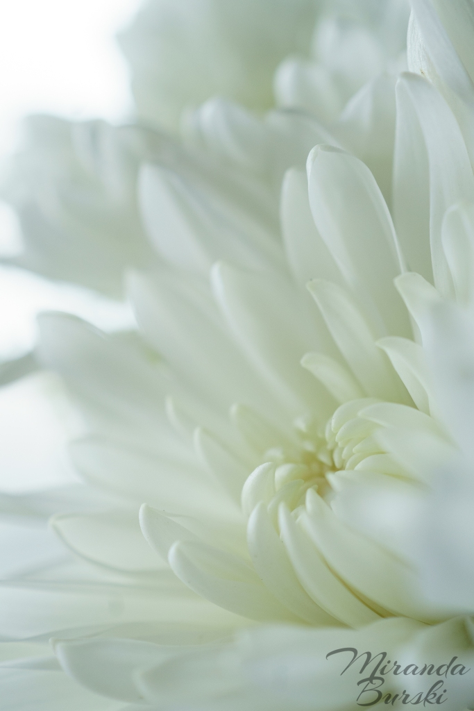 A close-up of a white flower.